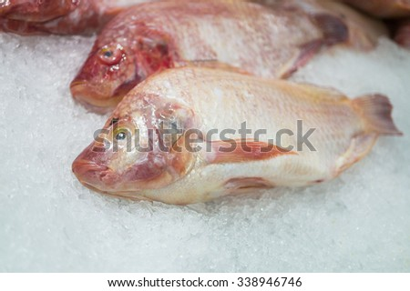 Close up of Red Snapper on Ice