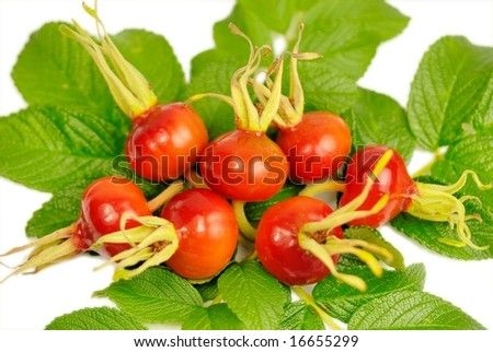 Close-up of rosehips - stock photo
