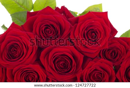 Close-up of roses - stock photo