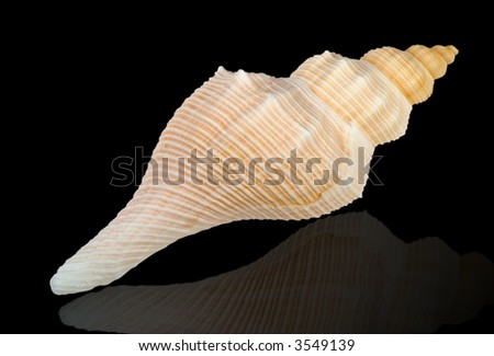 Close-up of sea shell isolated on black - image10. Clipping path included.