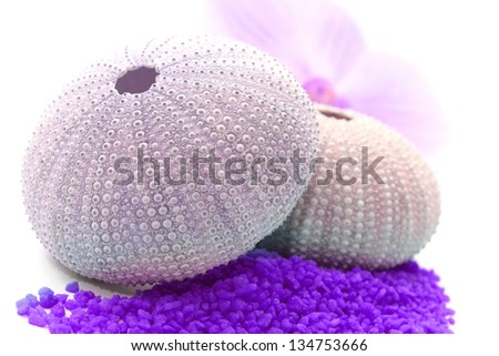 close up of sea urchins with orchid and violet salt - stock photo