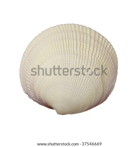 close up of seashell on white background with clipping path - stock photo