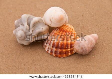 close-up of seashells on wet beach sand - stock photo
