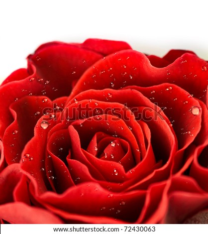 Close-up of single red rose bud - stock photo