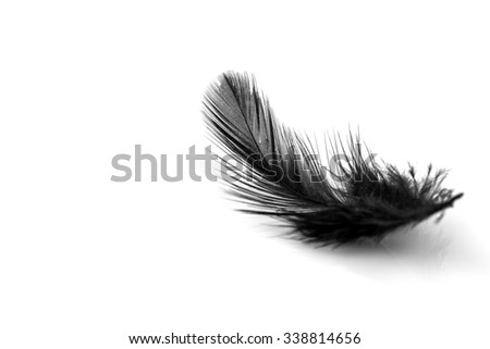 Close-up of small black feather isolated on white backgroind - stock photo
