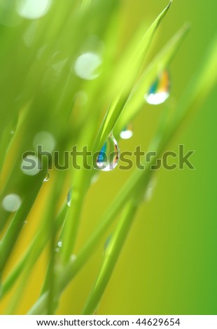 Close-up of small drop on young wheat - stock photo