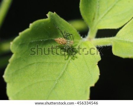 close up of small garden spider on green leaf - stock photo
