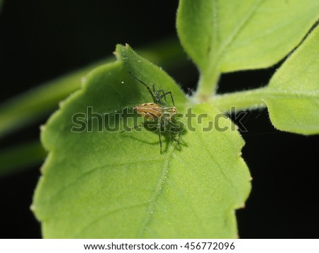 close up of small garden spider on green leaf under sunlight - stock photo
