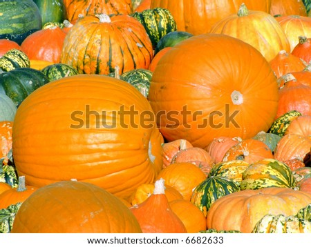 Close-up of some different color and shape pumpkins