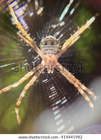close up of spider on spiderweb - stock photo