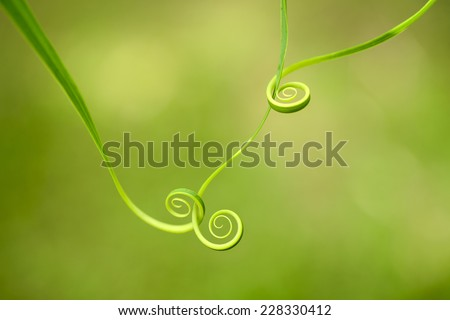 Close up of  spiral green leaf     - stock photo