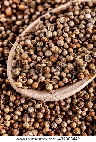 Close up of spoon full of dried coriander seeds Coriandrum sativum. - stock photo