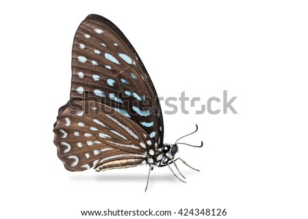 Close up of Spotted Zebra (Graphium megarus) butterfly, side view, isolated on white background with clipping path - stock photo