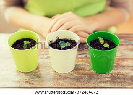 close up of sprouts in pots and gardener or woman - stock photo