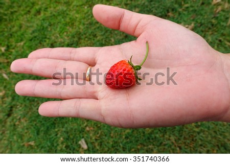 Close up of strawberry on hand  - stock photo
