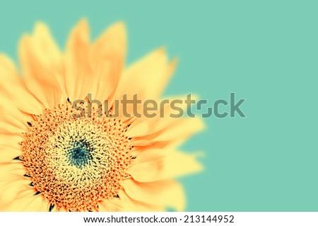 Close-up of sunflower-type flower - stock photo