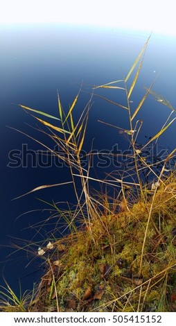 Close up of swamp waterline with reeds, moss, grass and fall leaves. Clear calm pond water reflecting blue sky at sunset. Scenic Scandinavian nature reserve in Southern Finland, Europe