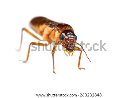 Close up of termite white ant on white background