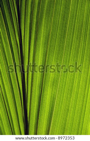 close up of the coconut leaf - stock photo