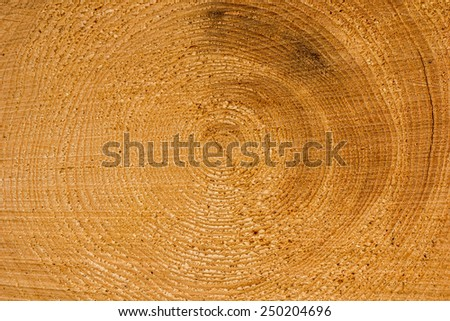 Close up of the cut of a log where you see the year rings - stock photo
