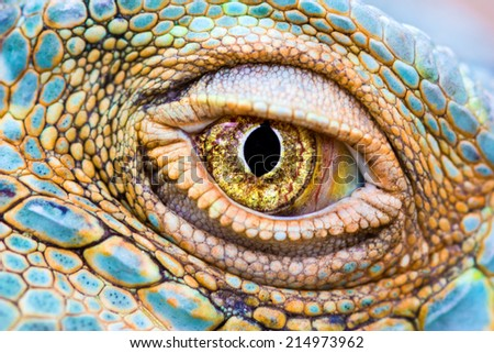 Close-up of the eye of a Green Iguana (Iguana iguana). - stock photo
