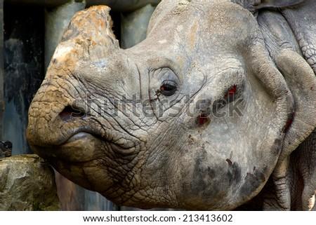 Close-up of the head of a Rhinocheros   - stock photo
