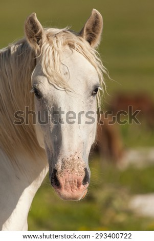 Close up of the head of white horse. Prairie background