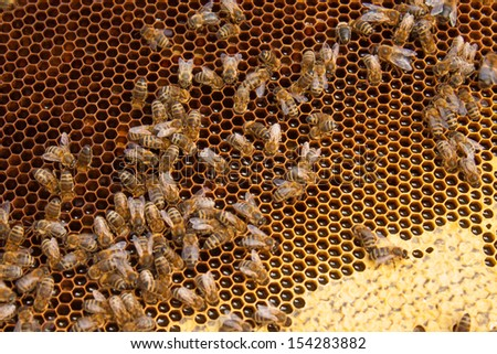 Close-up of the honeycomb with hardworking bees