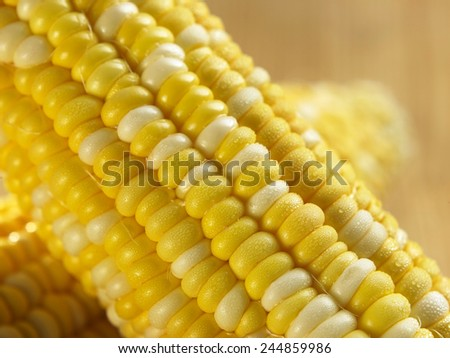 close up of the ripe corn - stock photo