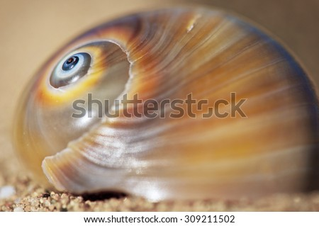 Close up of the spiral on a patterned sea shell on the sand.