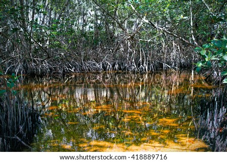 Close-up of the undergrowth and roots of Red Mangrove trees in Biscayne National Park - stock photo