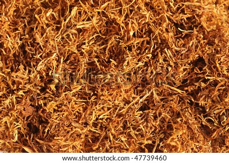 Close up of Tobacco for Cigarettes - stock photo