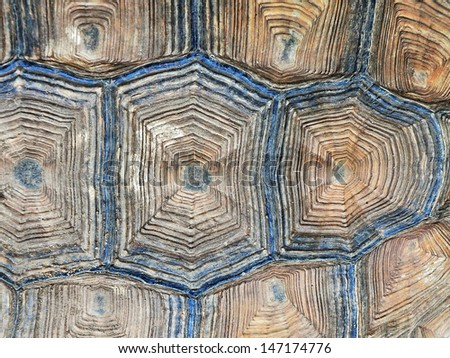 Close-up of Tortoise shell - stock photo