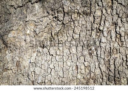 Close Up of Tree Bark - stock photo
