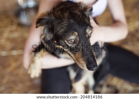 Close-up of unrecognizable woman holding and stroking her dog - stock photo