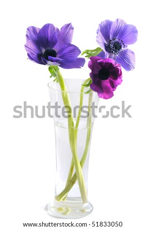 Close-up of violet flowers in a vase on white background - stock photo