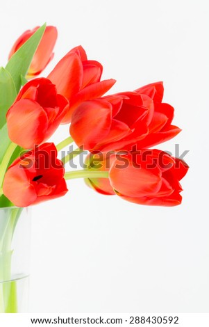 Close up of vivid orange fresh cut spring tulips in a glass vase with white background and copy space. - stock photo