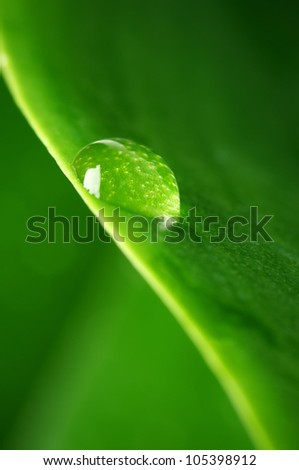Close-up of water drop on green leaf. - stock photo
