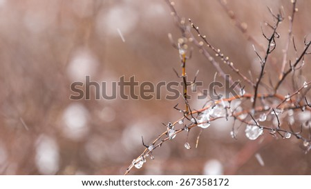 Close-up of water drops in a plant while snow falls. - stock photo