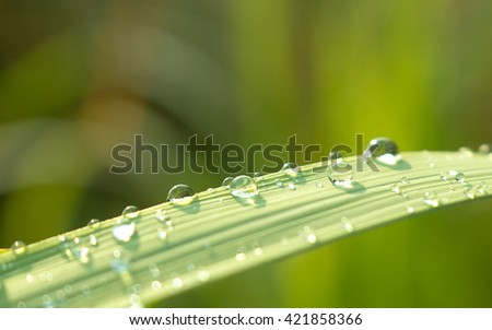 Close up of Water drops on green leaf with nature in rainy season background. - stock photo