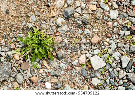 Close Up of Weed in the Dirt