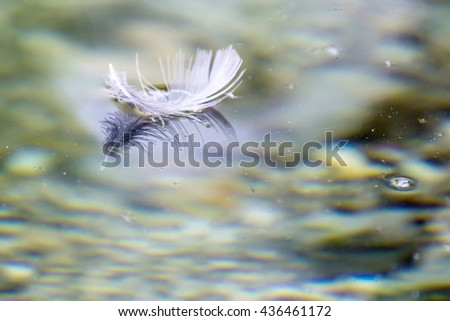 Close-up of weightless white feather on the surface of water