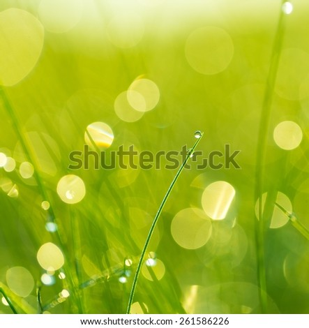 Close up of wet grass in summer morning. nature background - stock photo
