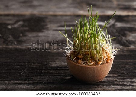 Close-up of Wheat Grass Sprouts in a Wooden bowl - stock photo