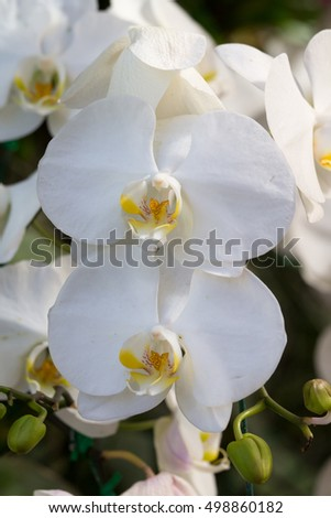 close up of white blossom orchid