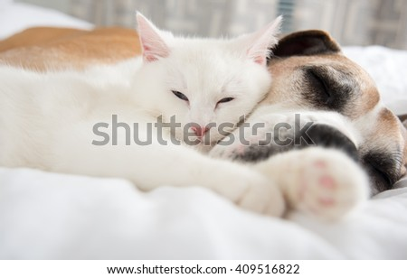 Close up of White Cat Loving Boxer Mix Dog. Sleeping Together on Bed.