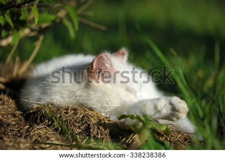 Close up of white cat, sleeping under a bush in the midday - stock photo