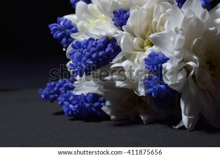 Close up of white chrysanthemum and blue grape hyacinth with dramatic lighting on black background. Macro shot. Studio lights and shadows. Purity and tenderness - stock photo