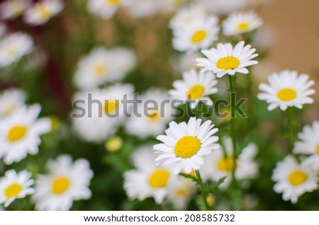 Close up of white flowers in flower shop in Japan - stock photo