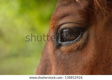 Close-up of white horse's eye - stock photo